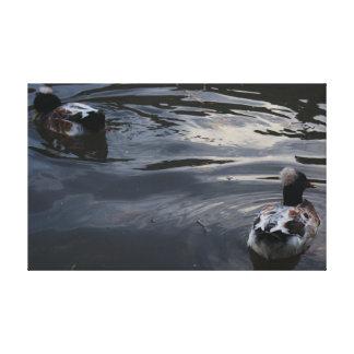 Photo déprimée de canard toiles