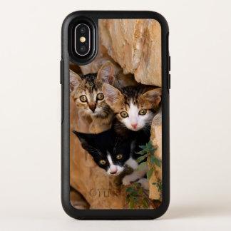 Photo drôle de trois de chat visages curieux