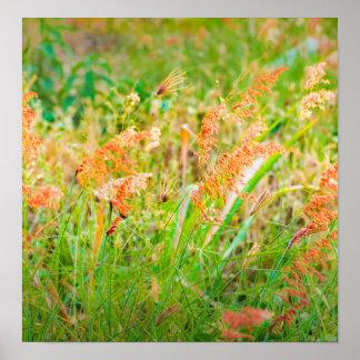Photo florale de scène d'après-midi poster