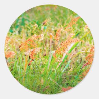 Photo florale de scène d'après-midi sticker rond