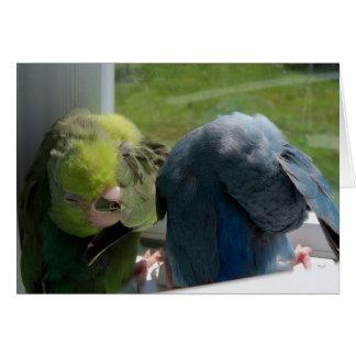 Photo humoristique de carte de voeux d'oiseaux de
