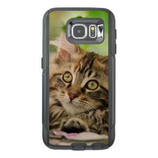 Photo mignonne de chaton de chat de ragondin du