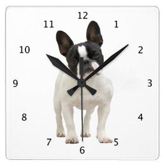 Photo mignonne de chiot de chien de bouledogue fra horloge carrée