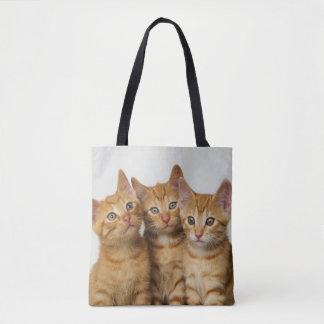 Photo mignonne de trois de gingembre chatons de sac