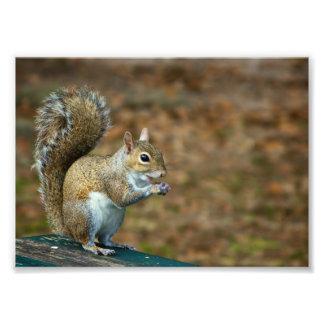 Photo mignonne d'écureuil