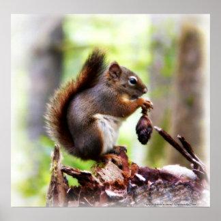 Photo mignonne d'une petite affiche d'écureuil