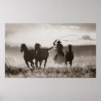 Photo noire et blanche des chevaux d'un Lassoing d Posters