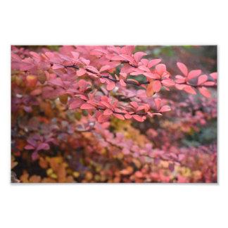 Photo orange rouge de nature de feuille d'automne