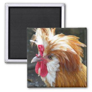 Photo polonaise de poulet magnet carré
