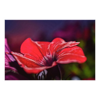 Photo rouge de fleur