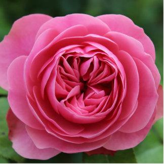 "Photo Sculpture 2""x3"" Sculpture Rose Macro"