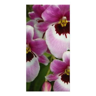 Photocard - orchidée de pensée cartes avec photo