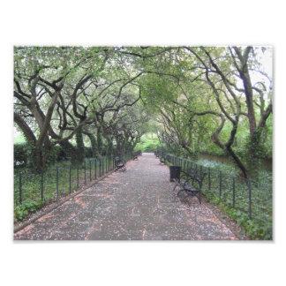 Photographie conservatrice du Central Park NYC de