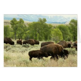 Photographie d'animal de nature de bison du carte de vœux