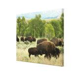 Photographie d'animal de nature de bison du toile tendue sur châssis