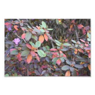 Photographie d'arbre de nature de feuille