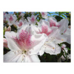 Photographie de jardin de fleurs d'azalée florale