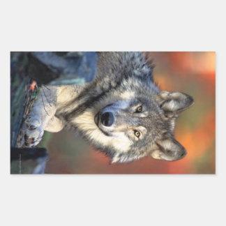 Photographie de loup sticker rectangulaire
