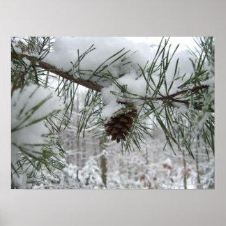 Photographie de nature d'hiver de branche de pin posters