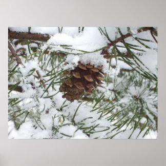 Photographie de nature d'hiver du cône I de pin de Posters