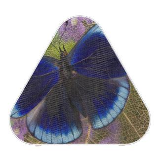 Photographie de Sammamish Washington de papillon Haut-parleur Bluetooth