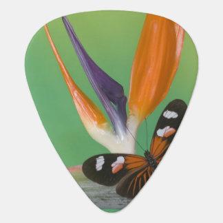 Photographie de Sammamish Washington de papillon Médiators