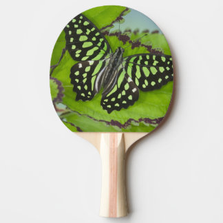 Photographie de Sammamish Washington de papillon Raquette Tennis De Table