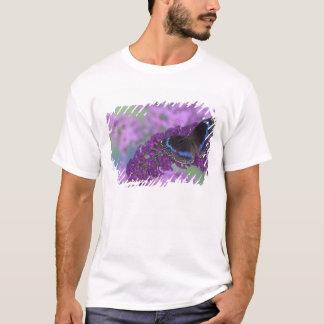 Photographie de Sammamish Washington de papillon T-shirt