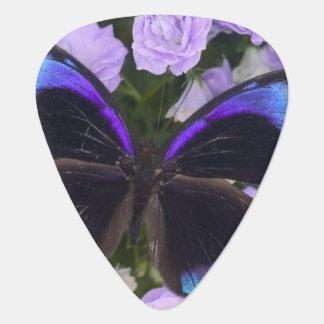 Photographie de Sammamish Washington du papillon 2 Médiators