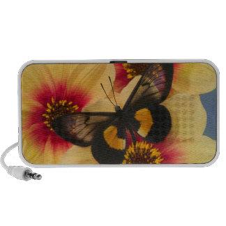 Photographie de Sammamish Washington du papillon 3 Système De Haut-parleurs