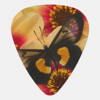 Photographie de Sammamish Washington du papillon Médiators