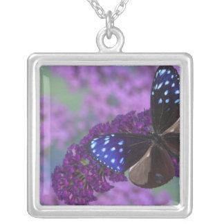 Photographie de Sammamish Washington du papillon Pendentif Carré