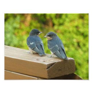 Photographie d'oiseau de nature d'hirondelles de
