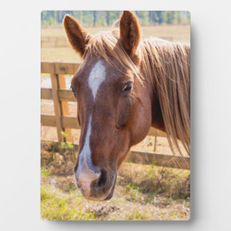 Photographie d'un cheval à la lumière du soleil à impressions sur plaque
