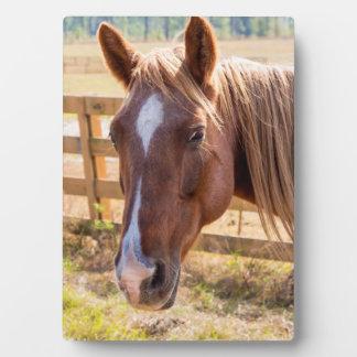 Photographie d'un cheval à la lumière du soleil à plaque photo