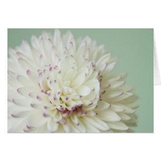 Photographie en pastel molle de fleur carte de vœux