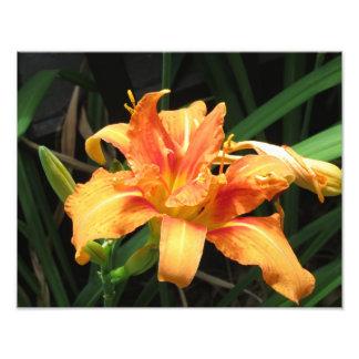 Photographie florale de fleur orange de fleur