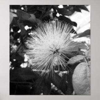 Photographie florale noire et blanche posters