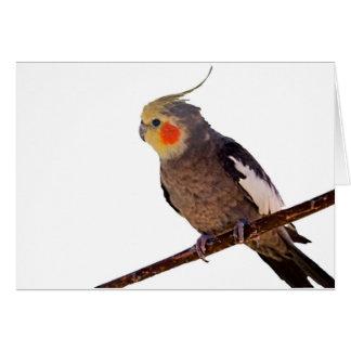 Photographie grise et jaune de Cockatiel d'animal Carte De Vœux