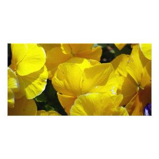 PHOTOGRAPHIE JAUNE de FLEURS des PENSÉES Yellow-pe Cartes Avec Photo