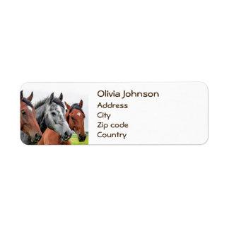 Photographie merveilleuse d'étalon de chevaux étiquettes d'adresse retour