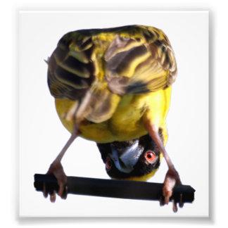 Photographie mignonne de birdie (satin)