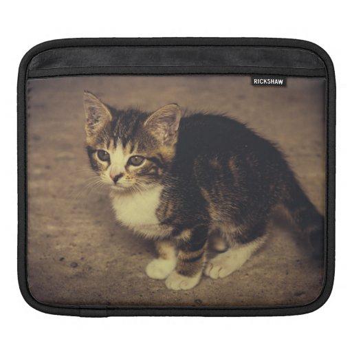 Photographie mignonne de chaton, animal de bébé poches iPad