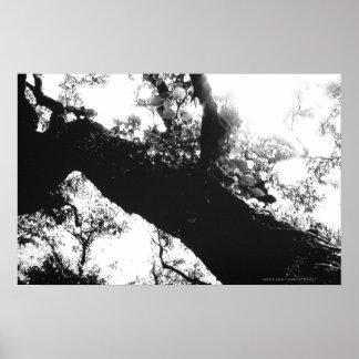 Photographie noire et blanche d'arbre de lumière d posters