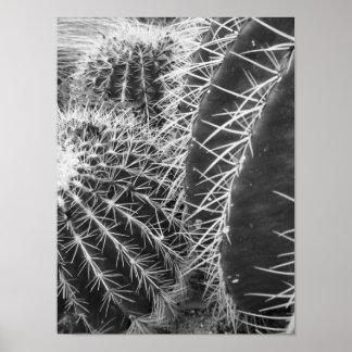 Photographie noire et blanche de cactus posters