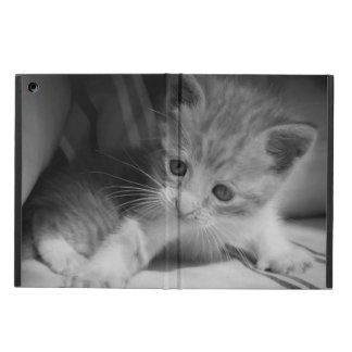 Photographie noire et blanche de chaton