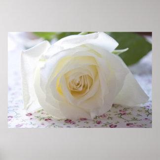 Photographie sensible de rose blanc affiches