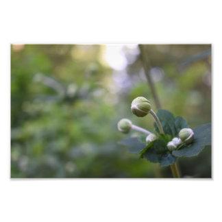 Photographie verte de nature de jardin de bourgeon