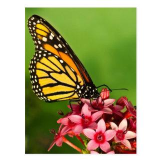Photographie vibrante de vue de côté de papillon carte postale