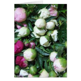 Photos 135 de la pivoine 2008 et du jardin carte de vœux